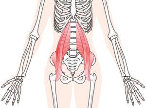腸腰筋の図